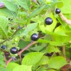 Bitkisel Tedavi Problemleri