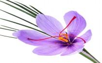 Safran Çiçeğinin Sağlığa Faydaları