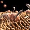Bağırsak parazitleri nasıl bulaşır?