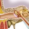 Otitis Externa Bulguları, Tanı Ve Tedavisi