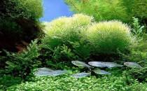 Spirulina Tablet (Mavi-Yeşil Alg'ler)