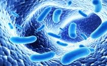 Probiyotik, Prebiyotik ve Sinbiyotik Arasıdaki Farklar